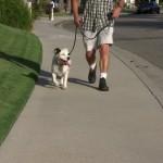 Rescue Dog Jasper